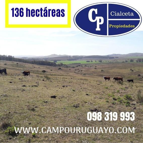 Campo De 136 Hectáreas Ganadero Forestal En Lavalleja