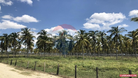 Remax Costa Azul Vende Finca 27 Has En Boca De Aroa