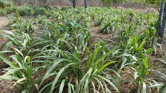 Vendo Fazenda Entre Croàta Pentecoste