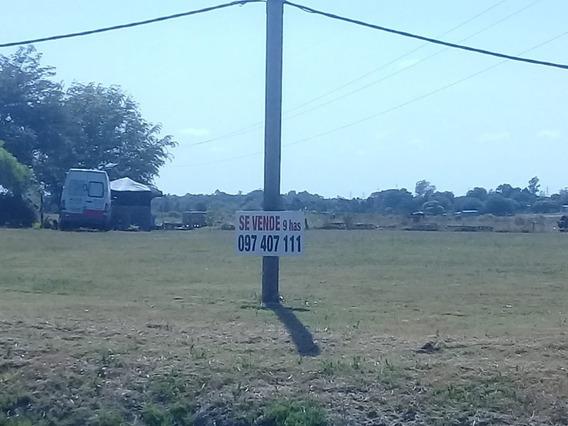 Se Vende Excelente Campo Sobre Camino Mendoza Para Empresa