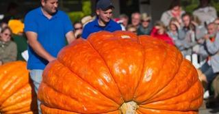 20 Sementes Abobora Gigante Dills Atlantic Guinness Record!!