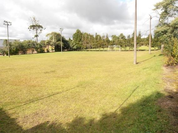 Terreno Para Venda Em São José Dos Pinhais, Borda Do Campo - Te-055_2-490322