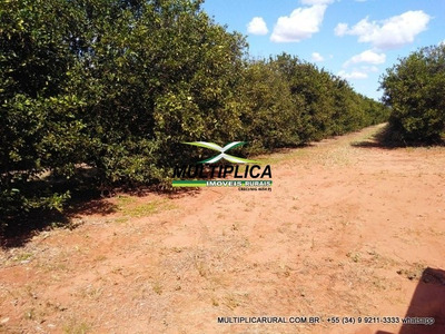 Sítio Uberlândia 26,18 Ha 5,41 Alq Agricultura - 233