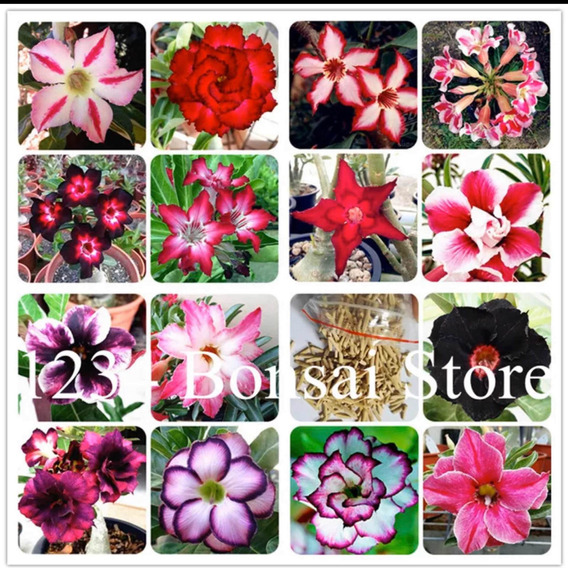 Kit Sementes Adenium Rosa Do Deserto Sementes Plantas Bonsai
