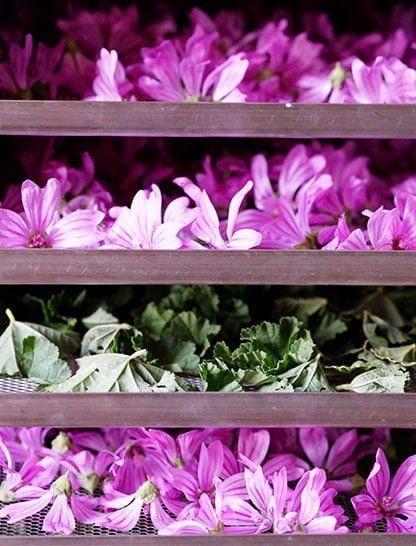 Hojas Y Flores De Malva Sylvestris 100% X 100% Orgánico 100g