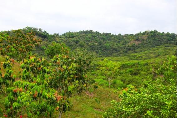 Fincas En Venta San Antonio De Anapoima 503-3305