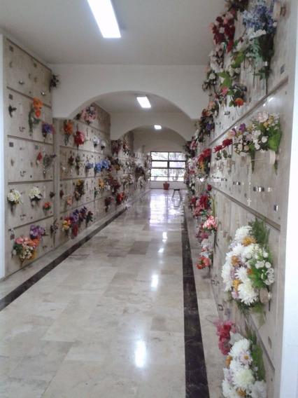 Cedo Concesion Nicho 571 Panteon Nuestra Señora De La Merced