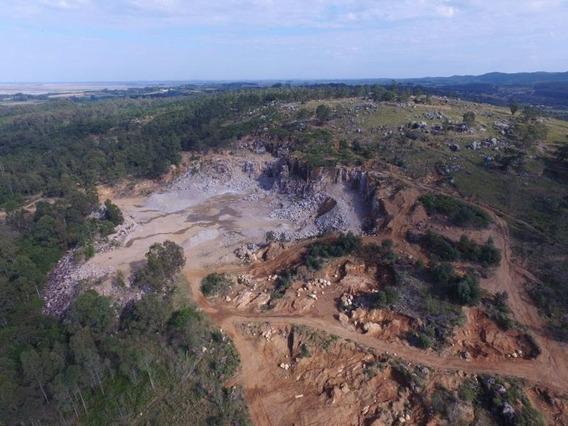 Área Para Venda Em Capão Do Leão, Área 315 Hectares Zona Rural Capão Do Leão R$ 22.000.000 - 36957