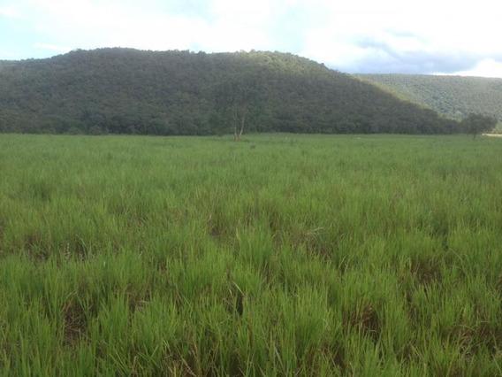 Fazenda Para Venda Em Nobres, Zona Rural - 831814