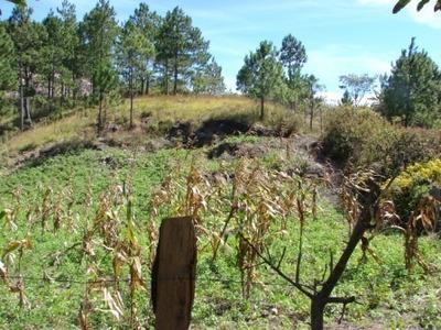 Venta De Terreno En Zona De El Macuelizo, Valle De Ángeles