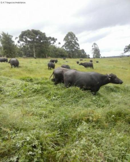Fazenda, Venda, Pinhal- Pilar Do Sul/sp - Fa00060 - 33724482