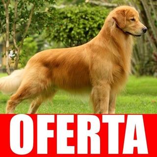 Entrena A Tu Perro Golden Retriever Completa Actualizada !