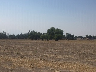 Se Vende Terreno De 19,932.50 Metros Cuadrados En Tepetitlán, Municipio De Chiautla