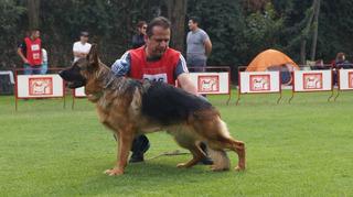 Apartado Preventa Cachorros Pastor Alemán Pedigree Perros