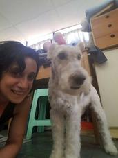 Peluqueria Canina A Domicilio (consultar Zona)