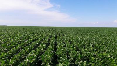 Vendo Fazenda De 212 Alq Cultura Soja Regiao De Maringa 6049