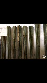 Paquete De 10 Varas De Bambú Inmunizado
