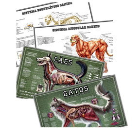 Kit 4 Posters 65x100cm Veterinária Anatomia Cachorro + Gato