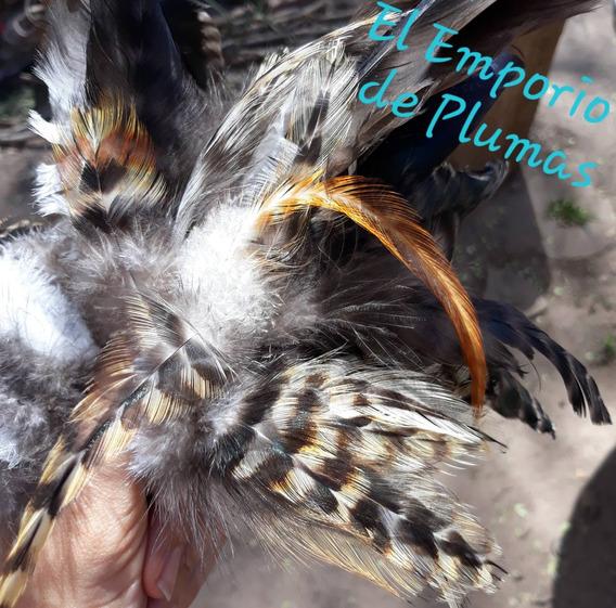 Plumas Naturales De Gallo Pack Por 100 Plumas
