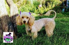 Peluqueria Canina Y Felina A Domicilio