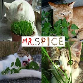 Combo Erva Dos Gatos + Grama / Catnip Cat Grass Frete Grátis
