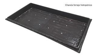 Charola Forraje Verde Hidropónico 100 Charolas