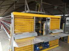 Fabricacion De Equipos Para Gallinas Ponedoras Automaticos
