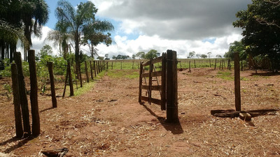 Fazenda Com 3 Quartos Para Comprar No Setor Central Em Piracanjuba/go - 624