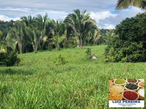 Imagem 1 de 15 de Fazenda À Venda Em Pacaja - Pa - De 1.900 Alqueires (dupla Aptidão) - 1649