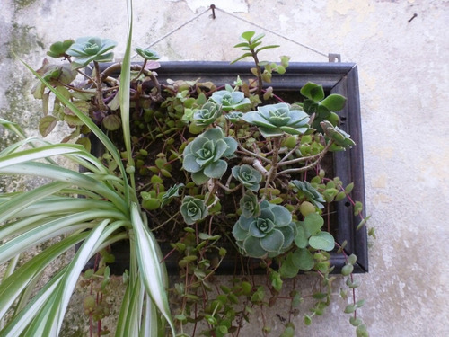 Cactus Cuadro Plantas Interior Natural Jardín Vertical