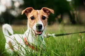 Imagem 1 de 1 de Passador De Cães