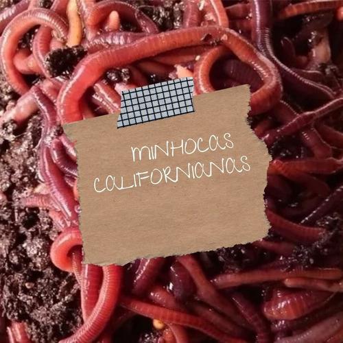 150 Minhocas Californianas Compostagem+ Húmus+ Manual Grátis