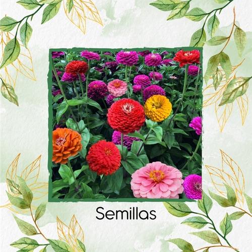 50 Semillas Flor Zinnia De California + Obsequi Germinación