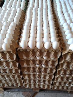 Huevos Blanco N1
