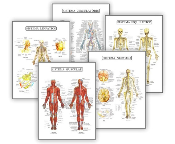 Kit 5 Posteres Anatomia Med Fisioterapia Fisiologia 45x60 Cm