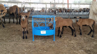Comedero Para Corderos Creep Feeding