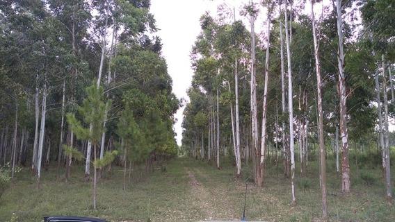 Campo Forestado Entre Rios