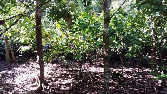 Finca De Cacao En Tenares, Hermanas Mirabal