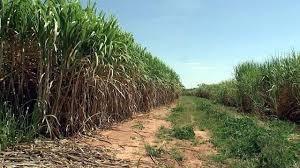 Fazenda Arrendada Em Cana Regiao De Sacramento-mg (6043)