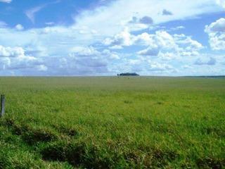 Fazenda Para Venda Em Miranda, Centro - 1048