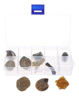 10 Piezas Colección De Fósiles Naturales Biología
