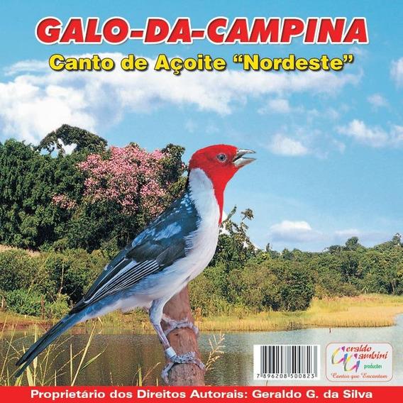 Cd Canto -do Galo-da Campina Canto-de Açoite Nordeste