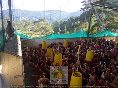 Vendo Granja Avicola En Chinacota