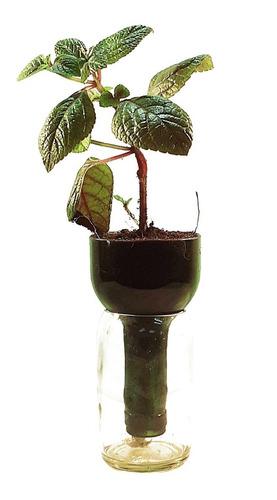 Imagen 1 de 10 de  Dolar Negro Little Plant 15, Maceta Autorregante