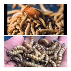Tenébrios Gigantes 50 Unidades - O Frete Mais Barato Larvas