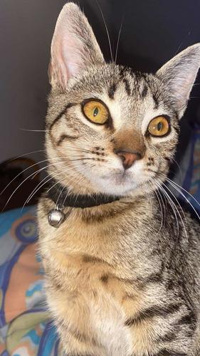 Imagem 1 de 4 de Gatinha Mabel Desaparecida
