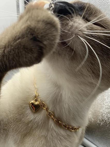 Coleira Banhado Ouro Gatos Pets Elo Português Ping Coração