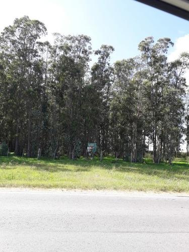 Campo En Ruta 32