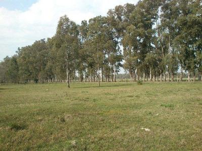 Terrenos En General Rodriguez.