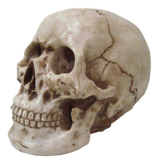Cranio Grande Tamanho Real Resina De Alta Qualidade